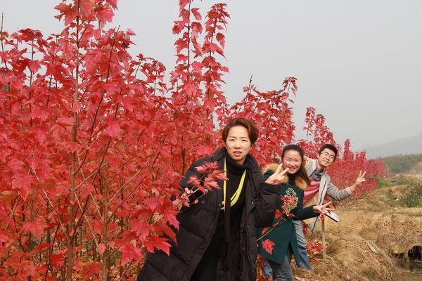 冬至日,华彩三农邀您赏枫可好!