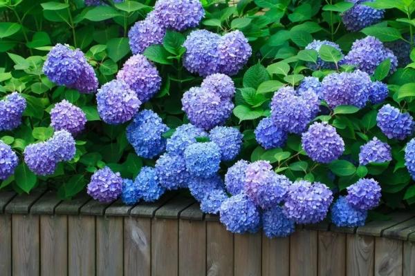 超美的紫色花海,惊艳您的景区!