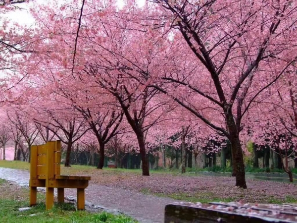 分享:观花类树种的园林运用