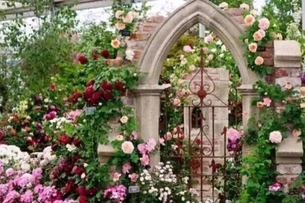 美丽的庭院,怎能少了月季花墙!