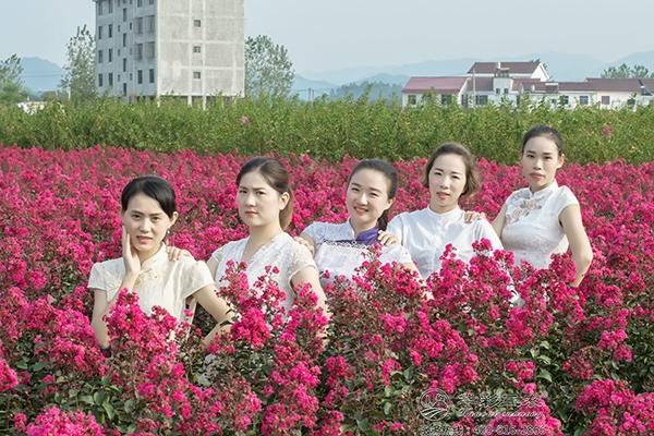 矮紫薇,腰下花海,新晋网红打卡点,美丽乡村建设新宠