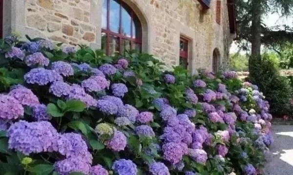 这几款高颜值花卉,已成为庭院打造首先!