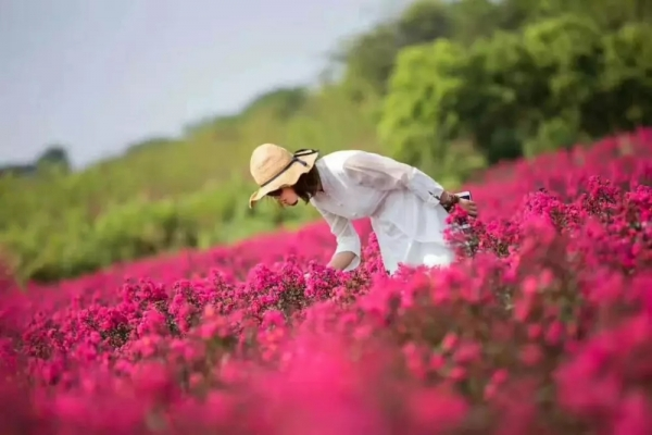 夏季花海种什么?这几种花卉助您引爆客流!