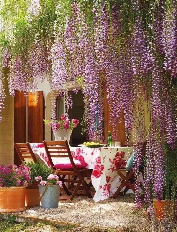 这样种紫藤,让您家庭院紫气东来!