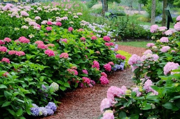 夏季时令花卉,给你一片烂漫花海!