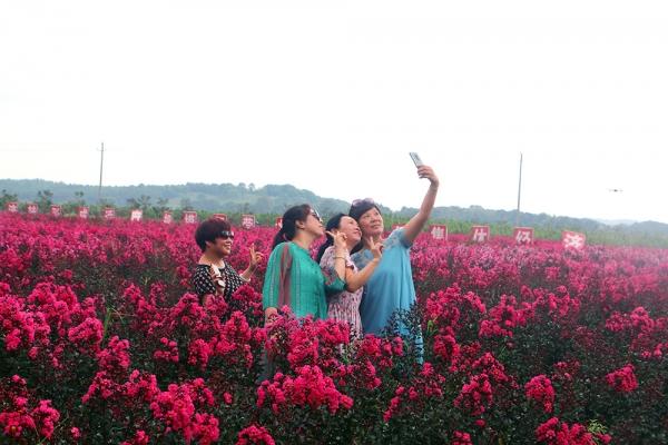 劲爆!千亩紫薇花海引观赏热潮,媒体、网红争相打卡!