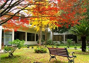 秋天的院子,真美!