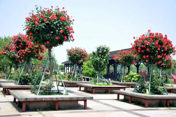 园艺,让景区更出彩!