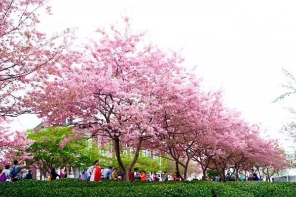 选对行道树,打造特色道路景观!