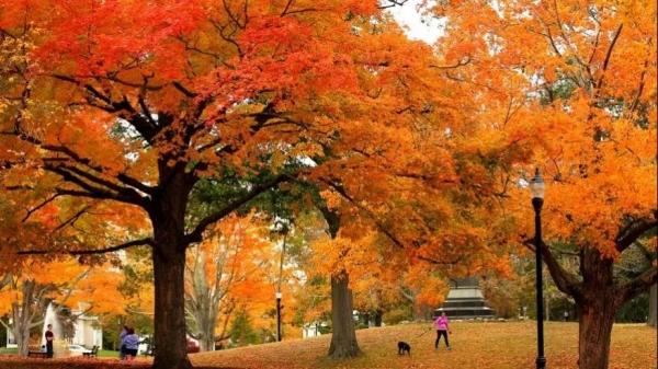 十月,一场秋天的童话即将上演~