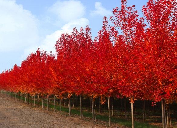 这些高颜值的秋季花海,必将引爆人潮!
