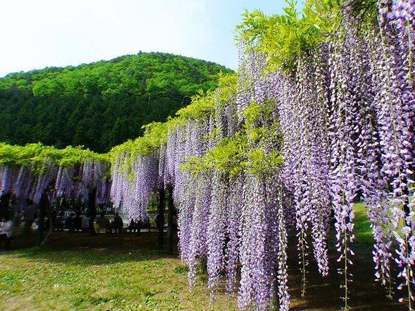 这些常见观花树种,下半年将迎来销售热潮!