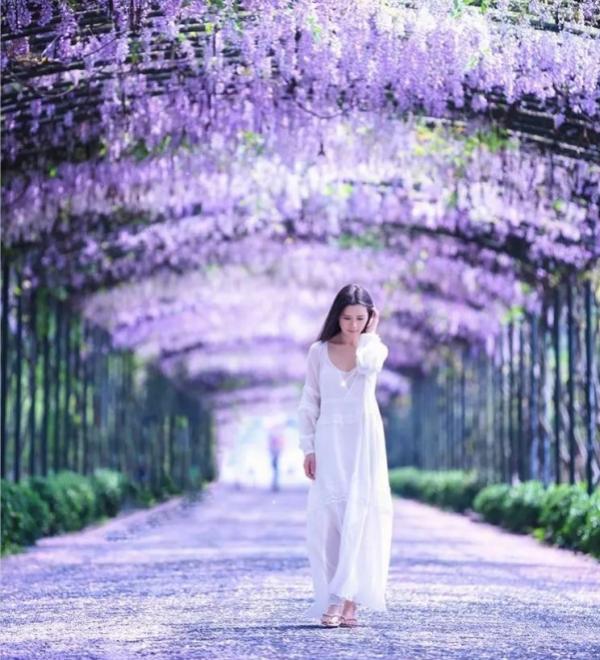 分享:紫藤在花海旅游中的运用
