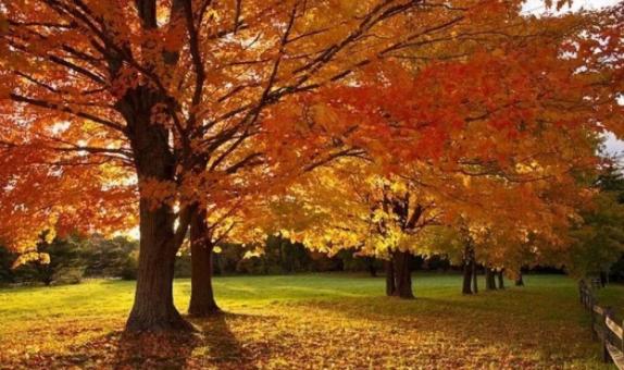 秋色,绝色