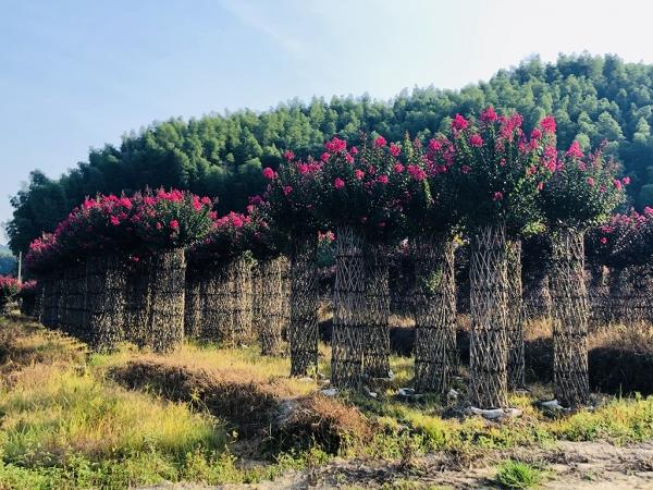 华彩三农:用植物编织美丽中国梦